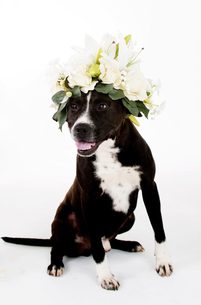 Janice_Freeland_2016_Dogs w_flowers_137