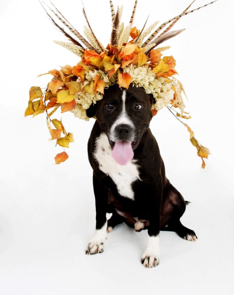 Janice_Freeland_2016_Dogs w_flowers_138