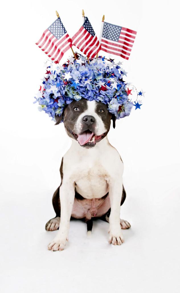Janice_Freeland_2016_Dogs w_flowers_140