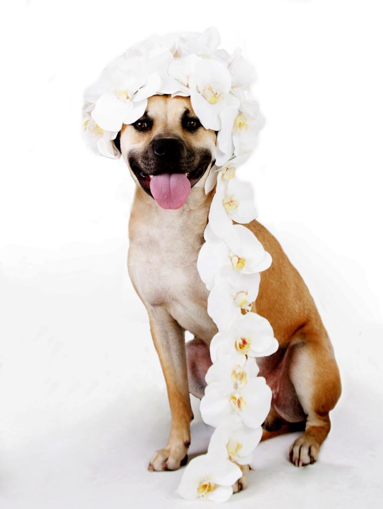 Janice_Freeland_2016_Dogs w_flowers_155
